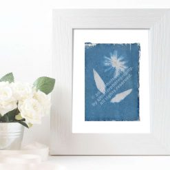 Original Cyanotype Daisy IV