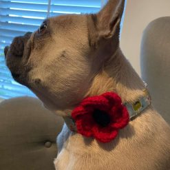 Pooch Collar Poppy – Small Medium & Large Bold Red Poppy to wear with pride.