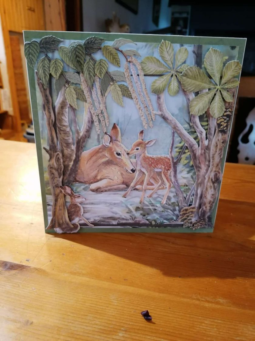 Nature Cards 3