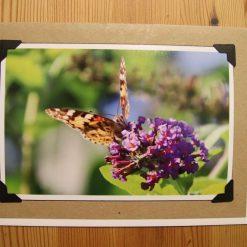 Photo card  Painted Lady on buddleia