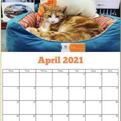 George the Stourbridge Junction Station Cat 2021 Calendar 18