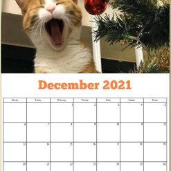 George the Stourbridge Junction Station Cat 2021 Calendar 26