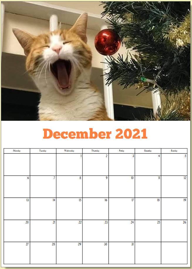 George the Stourbridge Junction Station Cat 2021 Calendar 13