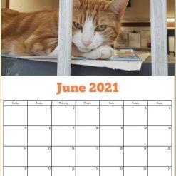 George the Stourbridge Junction Station Cat 2021 Calendar 20