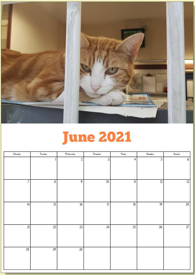 George the Stourbridge Junction Station Cat 2021 Calendar 7