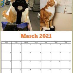 George the Stourbridge Junction Station Cat 2021 Calendar 17