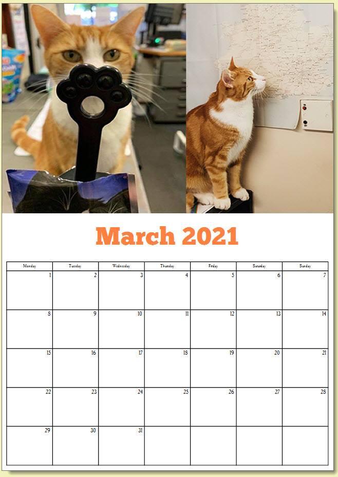 George the Stourbridge Junction Station Cat 2021 Calendar 4