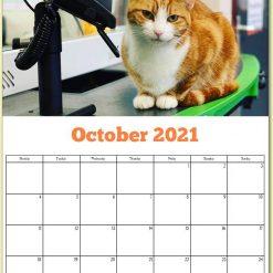 George the Stourbridge Junction Station Cat 2021 Calendar 25