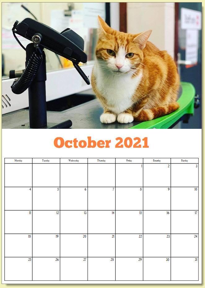 George the Stourbridge Junction Station Cat 2021 Calendar 12