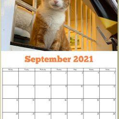 George the Stourbridge Junction Station Cat 2021 Calendar 23