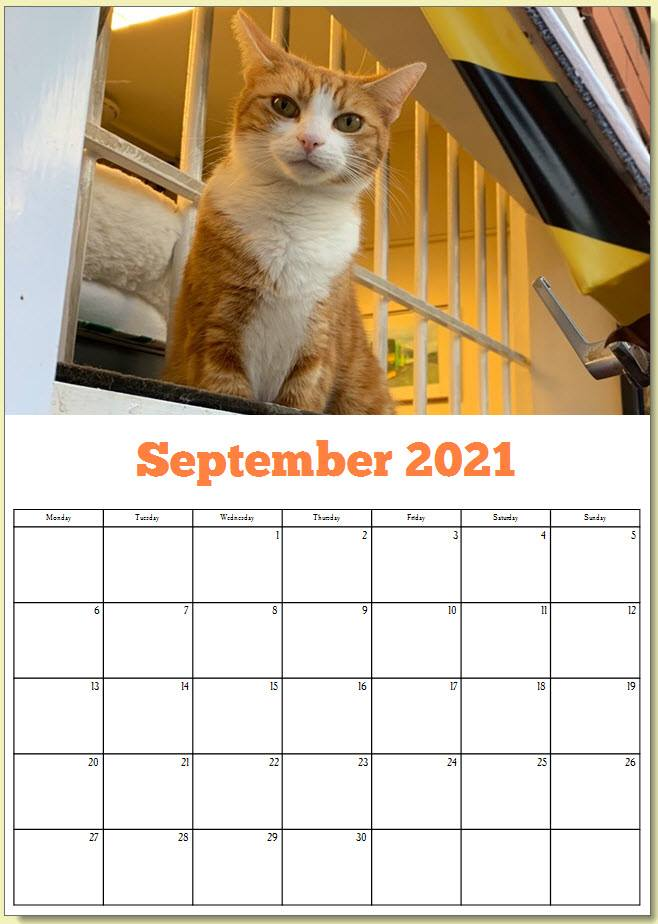 George the Stourbridge Junction Station Cat 2021 Calendar 10